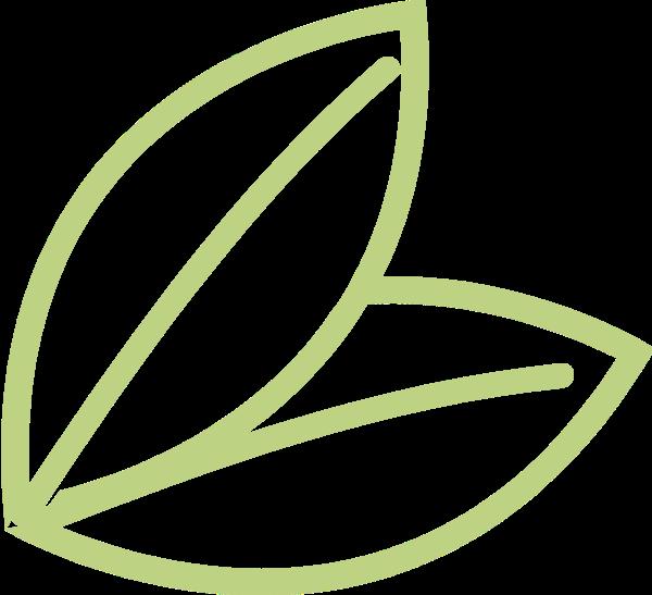 叶子绿叶嫩芽植物绿植