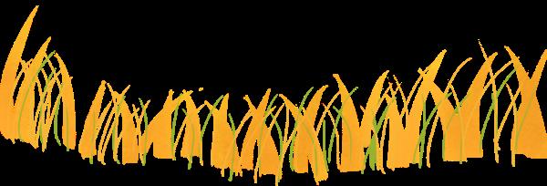 草杂草植物绿植养护
