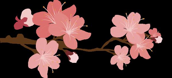 樱花树樱花花朵花卉花