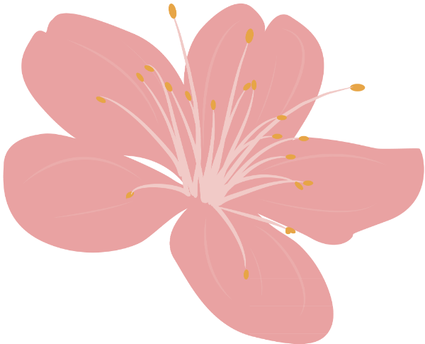 花花朵花卉樱花植物