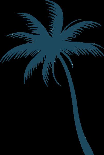 椰树椰子树树木树植物