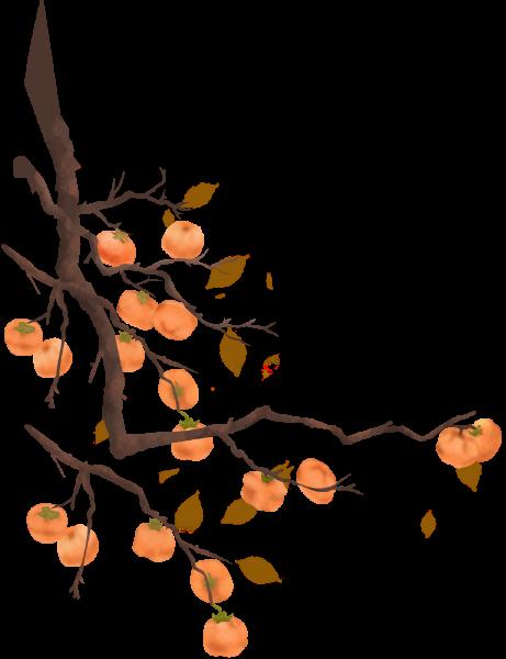柿子柿子树植物水果季节