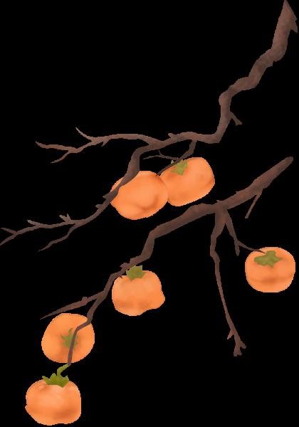 柿子树柿子树枝水果季节