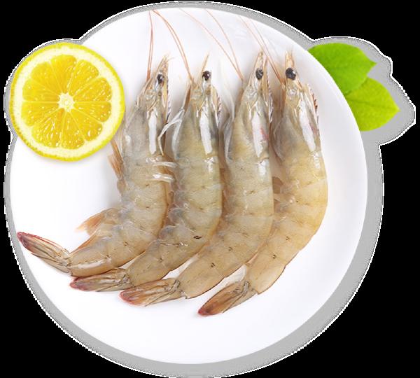海鲜鲜虾虾动物河鲜