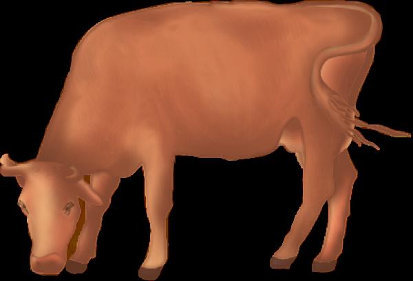 牛水牛黄牛耕牛牲口