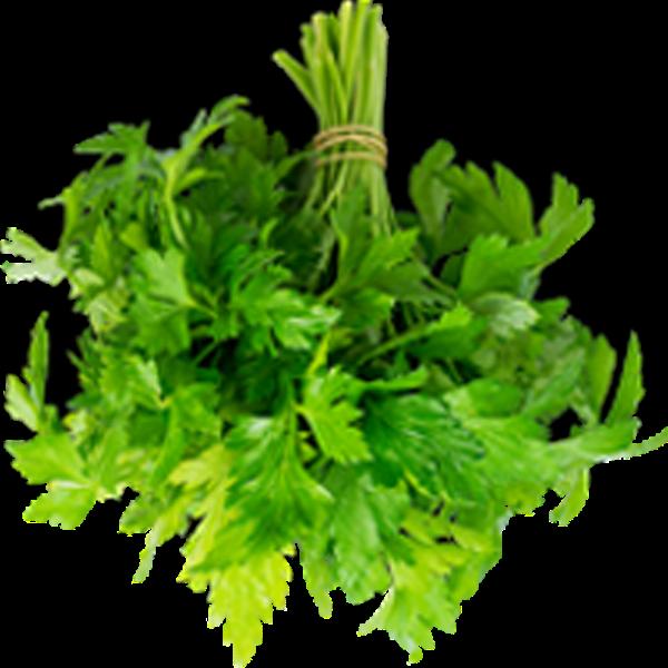 香菜芹菜菜蔬菜实物