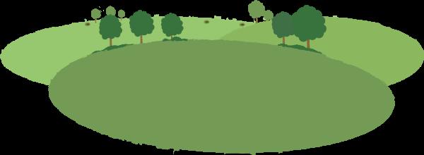森林树木绿色植物绿叶
