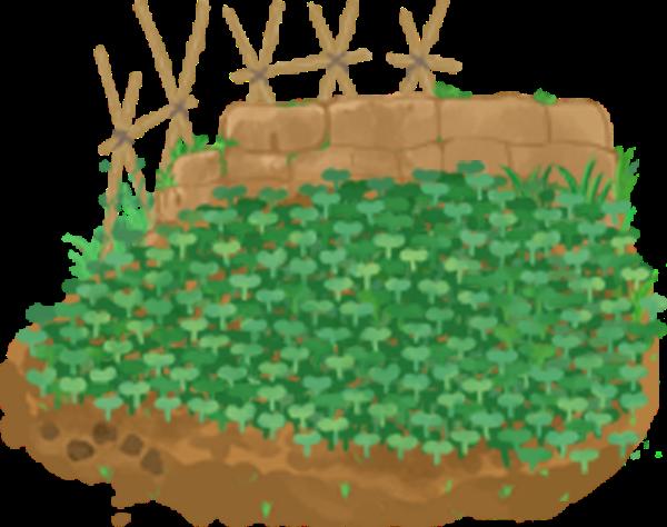 菜园菜地篱笆种树植物