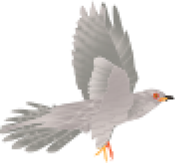 鸟飞鸟鸟类鹰禽类