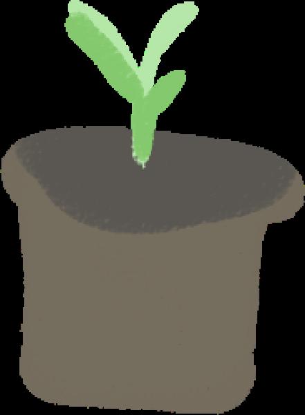 盆栽植物绿植小草嫩绿