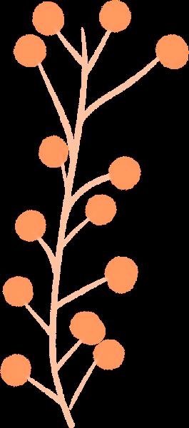 花卉花花朵植物果实
