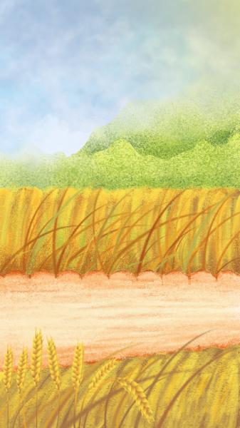 田农村路麦穗麦子