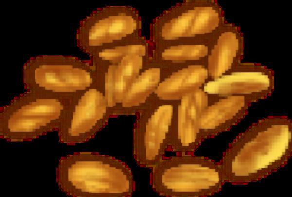 麦子麦穗小麦庄稼粮食