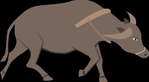 牛动物黄牛水牛家畜
