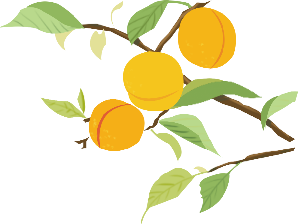 桃子水果树枝树杈植物