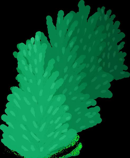 树植物灌木绿叶叶子