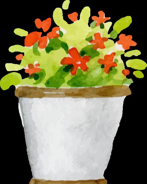 花盆盆栽植物绿植养护