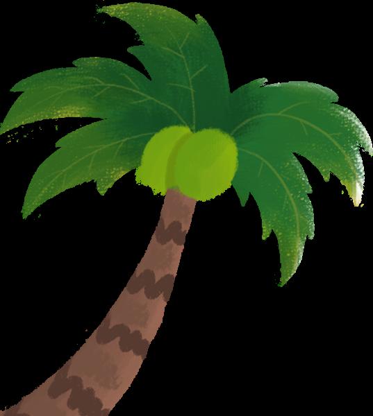 树树木植物椰树椰子树