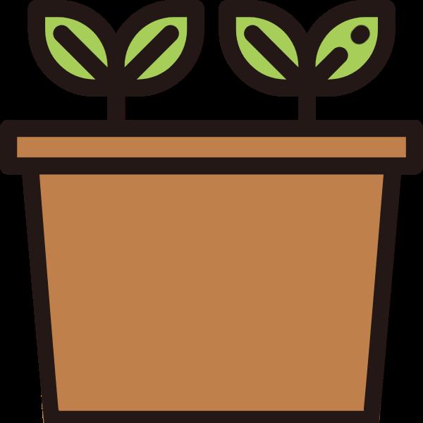 盆栽盆景树苗绿植植物