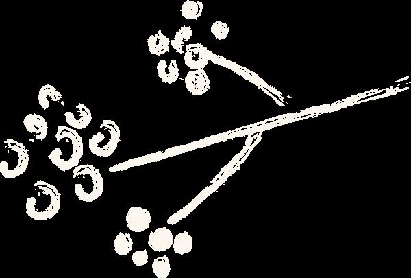 花花卉树枝花苞绿植