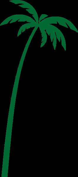 树木植物绿植椰子树树