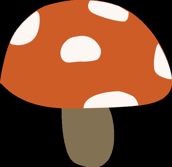 蘑菇香菇植物食物蔬菜