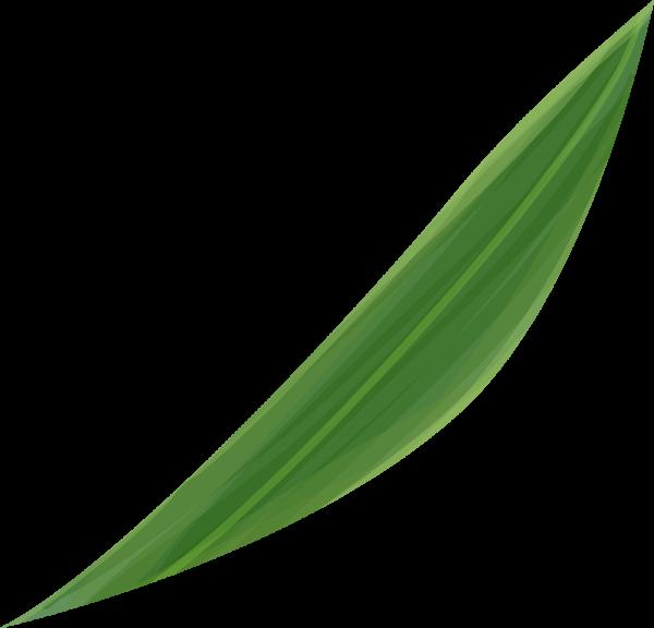 植物叶子树叶绿植氧气