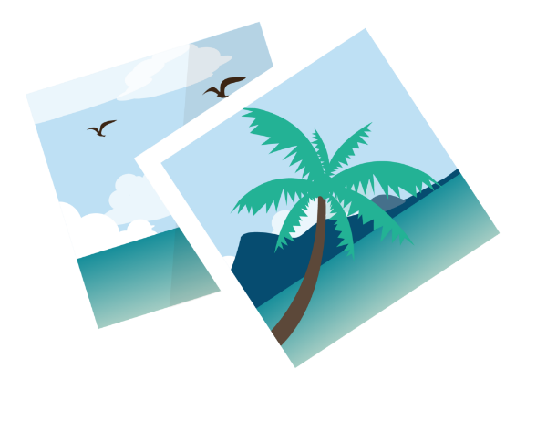 旅游照片风景椰子树明信片