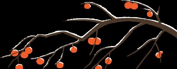 树果实腊梅植物冬季