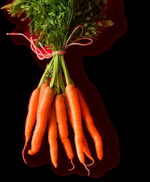 胡萝卜萝卜蔬菜健康实物
