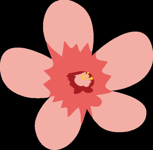 樱花花卉花花朵植物