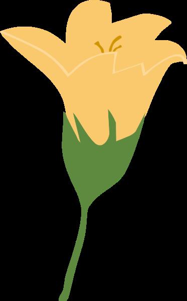 花卉百合花花朵植物