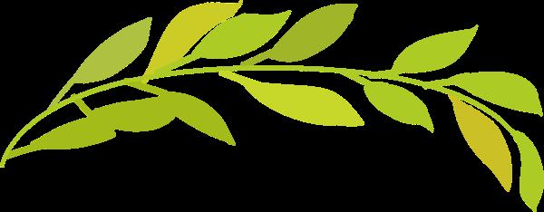 叶子树叶绿叶水彩绿色