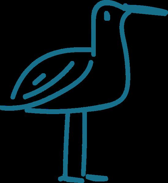 海鸥动物鸟可爱手绘
