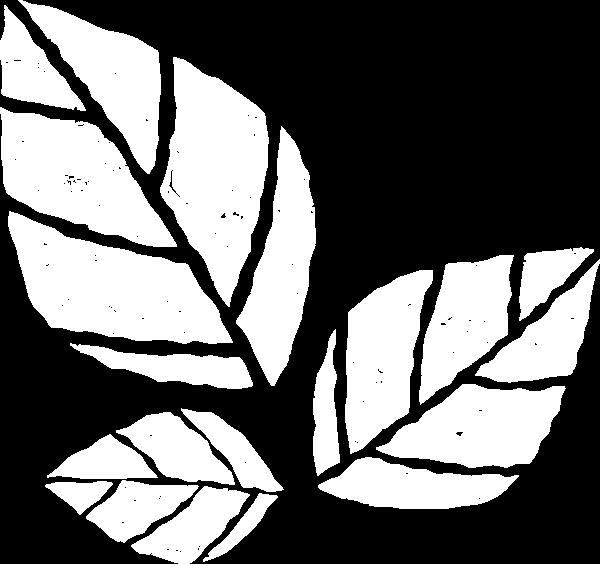 叶子树叶植物叶生机