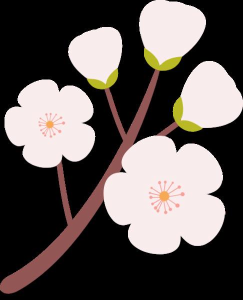 花花朵花卉桃花粉色