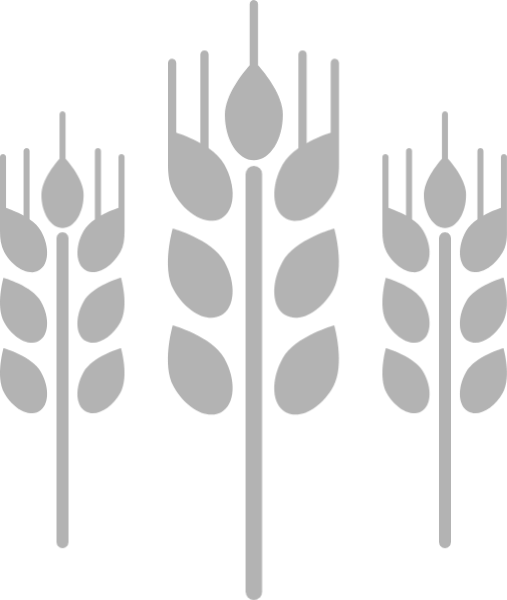 麦穗小麦麦子庄稼农作物