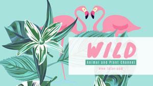 蓝色野生动物主题封面