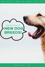 绿色简约宠物广告海报