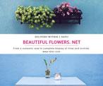 蓝色花卉主题海报