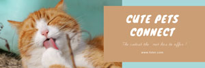 绿色猫咪主题封面